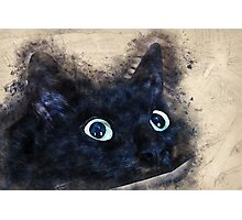 black kitty  Photographic Print