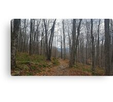 Trail Among the Catskill Mountains New York Canvas Print