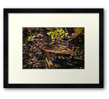 Gator baby and may flyers Framed Print
