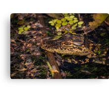 Gator baby and may flyers Canvas Print