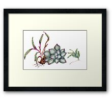 Succulents (coloured pencil) Framed Print