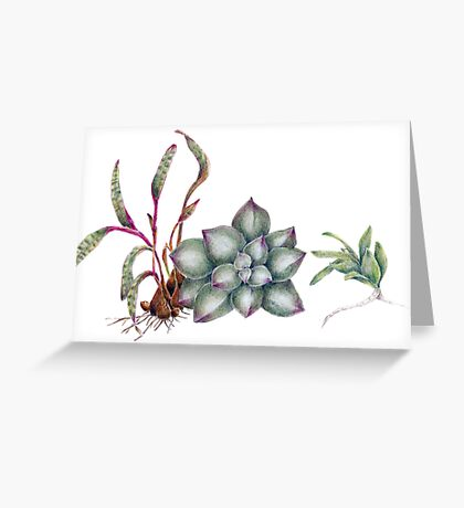 Succulents (coloured pencil) Greeting Card