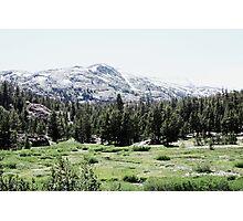 Yosemite Forest Landscape Photographic Print