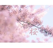 Lovely Light Pink Ethereal Glowing Cherry Blossoms Photographic Print