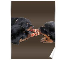 Loving and Sharing Rottweiler Puppies Poster