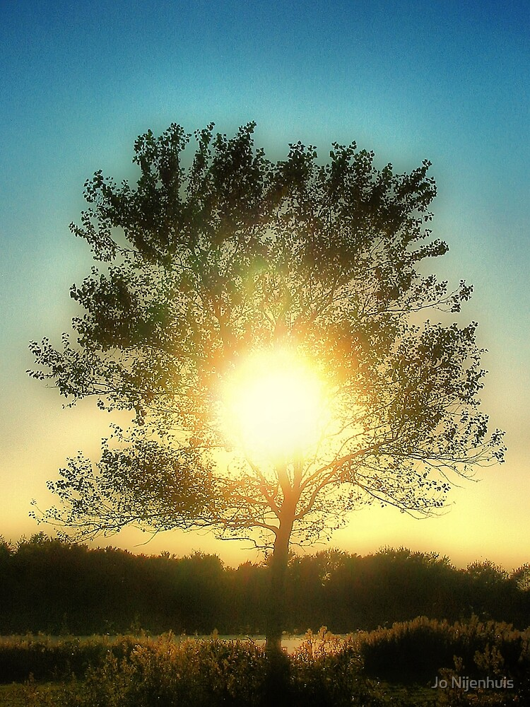 Sun Tree by Jo Nijenhuis