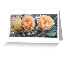 Desert Cactus Flowers Greeting Card