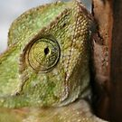 Chameleon Hanging On To A Door by taiche
