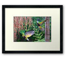Rainforest Colour. Framed Print