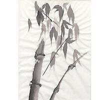 Bamboo Photographic Print