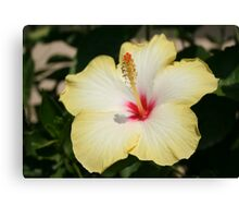 Yellow Hibiscus With Garden Background Canvas Print