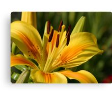 Beautiful Yellow Lily Canvas Print