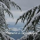 Pine Trees and Snow Season's Greetings From Fethiye by taiche