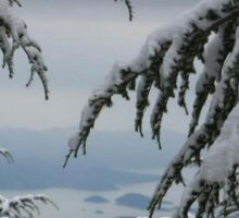 Pine Trees and Snow Season's Greetings From Fethiye Sticker