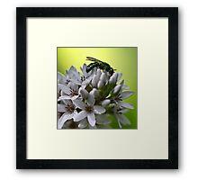 Gooseneck Loostrife and Metallic Green Bee Framed Print