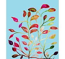 Red and Green Leaves on Light Blue Photographic Print