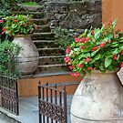 Steps Between Begonias by phil decocco