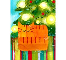 Christmas Red Cat with Christmas Tree Photographic Print