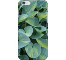Tropical hosta plant iPhone Case/Skin