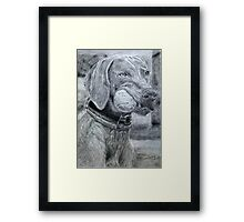 Dog with Ball Graphite Framed Print