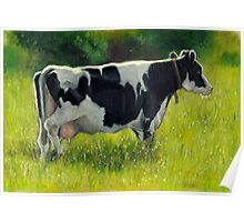 Holstein Dairy Cow in Oil Pastel No. 2 Poster