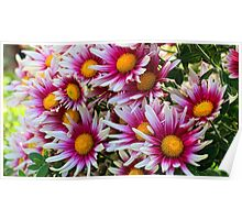 Blooming Daisies Poster
