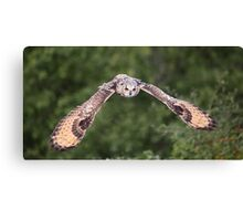 Bengal Eagle Owl in flight Canvas Print