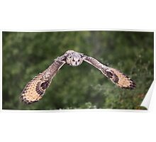 Bengal Eagle Owl in flight Poster