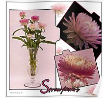 Photo Collage Of Strawflowers Poster