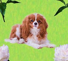 Cavalier King Charles Spaniel With White Peony by daphsam