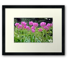 Purple spring tulips Framed Print