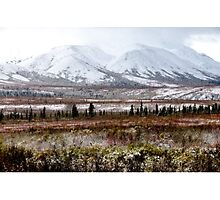 Denali - Winter Came Early 2 Photographic Print