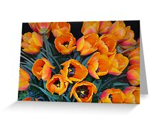 Orange spring tulips Greeting Card