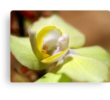 Green and Yellow Orchid Canvas Print