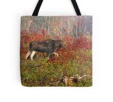 Maine Bull Moose  Tote Bag