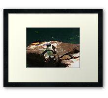 """""""Back-footed Penguin"""" by Carter L. Shepard""""  Framed Print"""