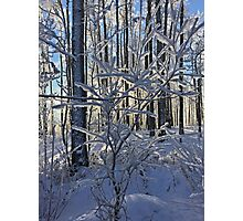 Frosty Branches  Photographic Print