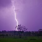 Jacaranda lightning by Penny Kittel