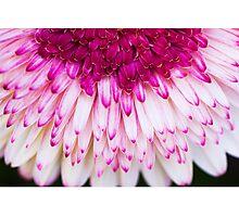 Porch Flower Photographic Print