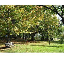 Maple Tree Photographic Print