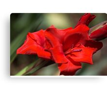 Gladioli Manhattan Canvas Print