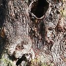Face In Tree by Chet  King