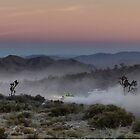 Desert Rally Sunset by ponycargirl