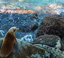 Sea kitten by MarthaBurns