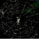 Spider hanging over the river by jammingene