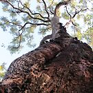 Gum tree by thejessis