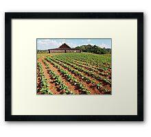 Viñales Tobacco Farm Framed Print
