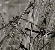 Rusty by traceyann33
