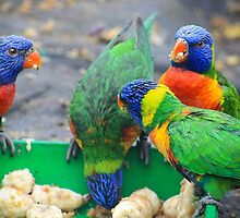 The parrot family by missmoneypenny