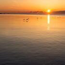 Graceful Sunrise Flight - Gliding over Delicately Ruffled Waters by Georgia Mizuleva